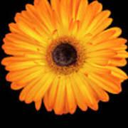 Macro Shot Of Flower Poster
