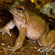 Mehu�n Green Frog Poster