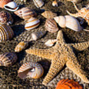 Mix Group Of Seashells Poster