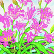 Pink Daily Lilies Poster