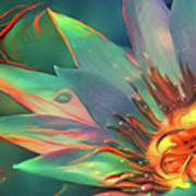 Teal And Peach Waterlilies Poster