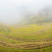Terrace Fields Scenery In Autumn Poster