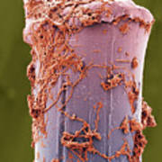 Used Toothbrush Bristle, Sem Poster by Steve Gschmeissner
