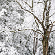 Winter In Monongahela National Forest Poster
