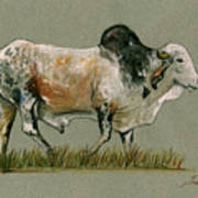 Zebu Cattle Art Painting Poster