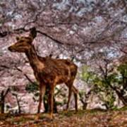Nara Japan Poster