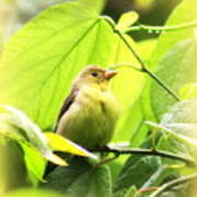 3154 - Tanager Poster