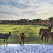 New Forest - England Poster