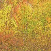 3991 Autumn Profusion Poster
