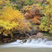 Autumn Foliage In Zion National Park Poster