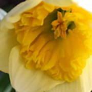 Daffodil Days Poster