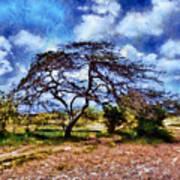 Desertic Tree Poster