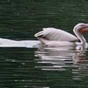 Fishing Pelican Poster