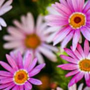 Flowering Garden.  Poster