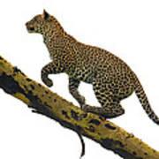 Leopard Panthera Pardus Climbing Poster