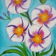 4 Morning Glories Flowers  Poster