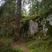 Old Forest In Kauppi Tampere Poster