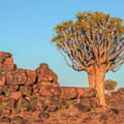 Quiver Tree Forest - Namibia Poster