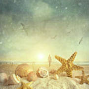 Starfish And Seashells  At The Beach Poster by Sandra Cunningham