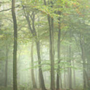 Stunning Colorful Vibrant Evocative Autumn Fall Foggy Forest Lan Poster