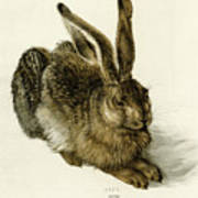 Young Hare Poster