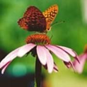 #416 14a Butterfly Fritillary, Coneflower Lunch Break Good Till The Last Drop Poster