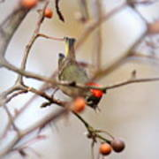 4370 - Ruby-crowned Kinglet Poster
