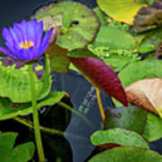 4466- Lily Pads Poster
