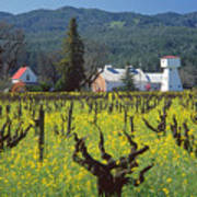 4b6394 Mustard In The Vineyards Poster