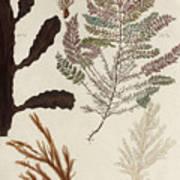 Aquatic Animals - Seafood - Algae - Seaplants - Coral Poster