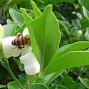 Australia - The Bees Poster