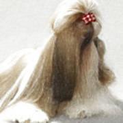 Beautiful Dog Poster