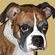 Boxer Dog Portrait Poster