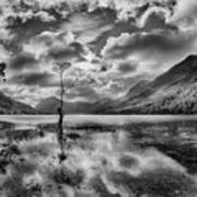 Buttermere Tree Poster