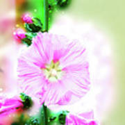 Common Hollyhock  Poster