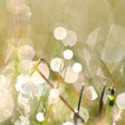Dew In Grasses Poster