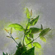 Fresh Growth Of Healthy Green Leafs  Poster