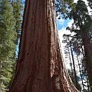 Giant Sequoia Trees Poster