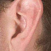 Human Ear Poster