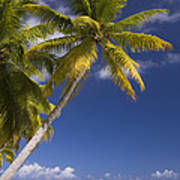 Polynesian Beach With Palms Poster