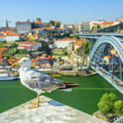 Porto Skyline Seagull Poster