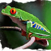 Red-eyed Leaf Frog Poster