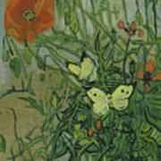 Butterflies And Poppies Poster