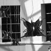 Hanging Butterflies Poster