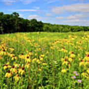 Marengo Ridge Wildflowers Poster