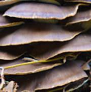 Mushroom Art Poster
