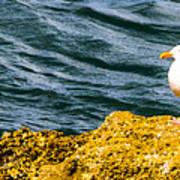 Sea Birds Poster