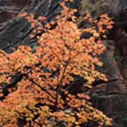Zion Autumn Foliage Poster