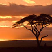 African Sunrise Poster