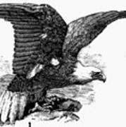 Eagle, 19th Century Poster